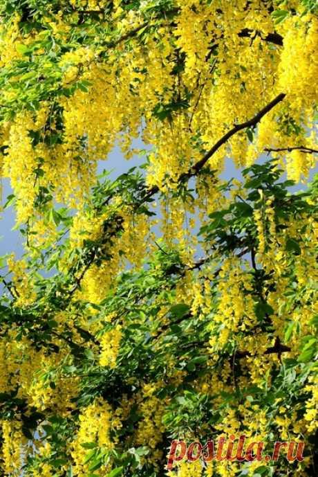 Весна почти на исходе И лето уже в дороге. Цветёт вовсю одуванчик, На клумбах - яркий тюльпанчик.  Дурманит запах сирени И птичьи радуют трели. Ночной концерт соловьиный Получше всяких пластинок.  А утром солнышко встанет В окошко ласково глянет. И день начнётся с улыбки, И радость будет в избытке.  © Copyright: Вера Киреева
