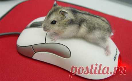 Функции компьютерной мыши, которые вы точно не знали! | Компьютерная помощь | Яндекс Дзен