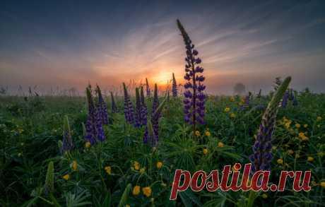 El amanecer lyupinovyy en la aldea Filippovsky la región de Vladímir. El autor de la foto – Vitaly Levykin: ¡nat-geo.ru\/photo\/user\/298732\/ Buenos días!