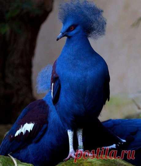 19 прекрасных и уникальных птиц, способных поразить вас своей красотой