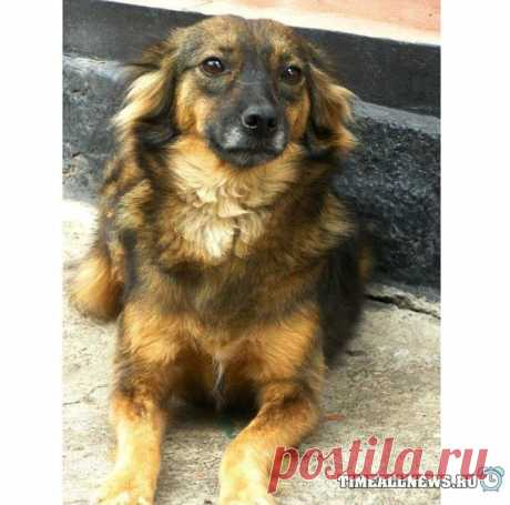 Несколько лет назад нашли эту собаку с перерезанным горлом (4 фото)