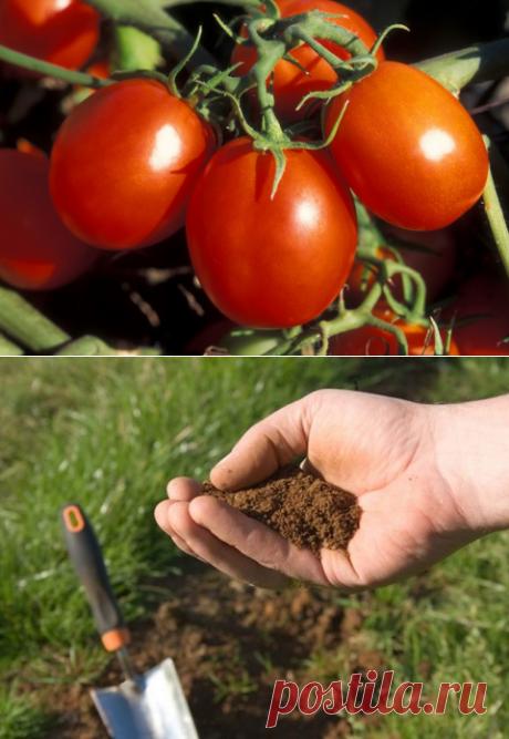 Определяем, чего не хватает вашим томатам и чем их подкормить
