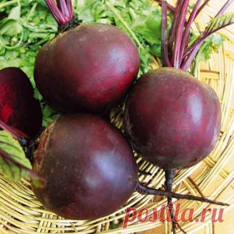 Салат из свёклы в банках на зиму. 7 простых и вкусных рецептов | Народные знания от Кравченко Анатолия