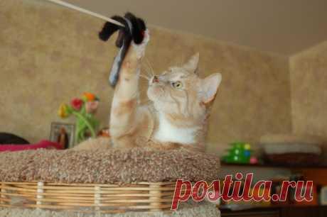 Десять советов для хозяев кошки, живущей в квартире | Дневник кошатницы | Яндекс Дзен