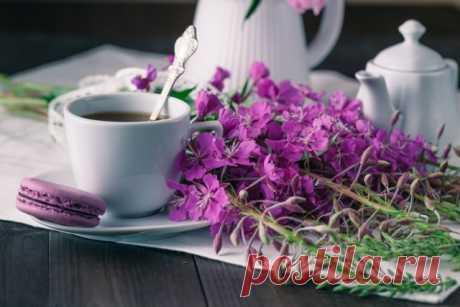 Как заваривать Иван-чай (кипрей)