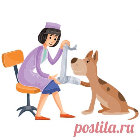 Письмо «Вы добавили питомца» — Питомцы — Яндекс.Почта
