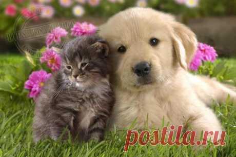 Las mascotas lindas aman las flores