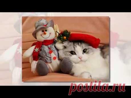 Murnyashny Congratulation for Christmas from cats