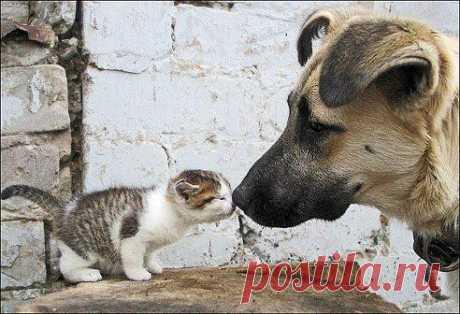 Даже враг может стать лучшим другом