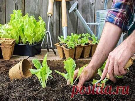 Что сажать весной на даче: составляем план | www.kakprosto.ru | Яндекс Дзен