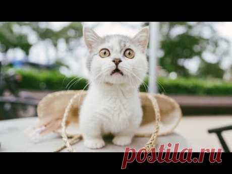 Кошки, кто они? / Кошки связаны с потусторонним миром - YouTube