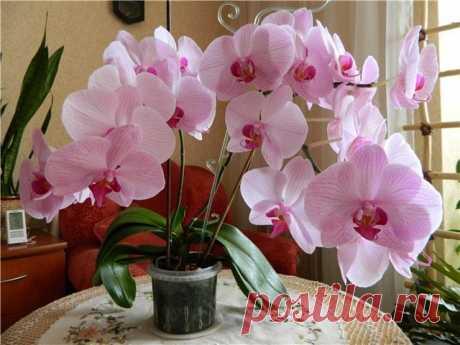 Орхидея будет цвести весь год, если следовать этим 7 хитростям