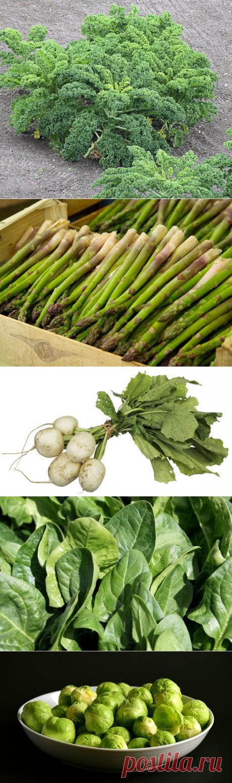 7 лучших источников витамина К | Доброго здоровья! | Яндекс Дзен