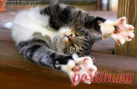 Приветствую всех! | KotoMail.ru