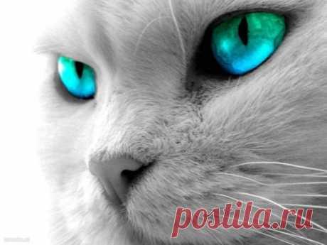 Какие цвета видят кошки и как они смотрят на мир Рубрика Досуг - Животные: Какие цвета видят кошки и как они смотрят на мир. Читай последние новости событий на Joinfo.ua