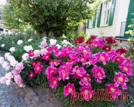 Последний месяц лета, что надо сделать цветоводам в августе — Садоводка