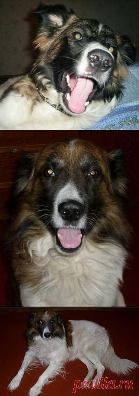 Как научиться понимать собак? | Домохозяйки