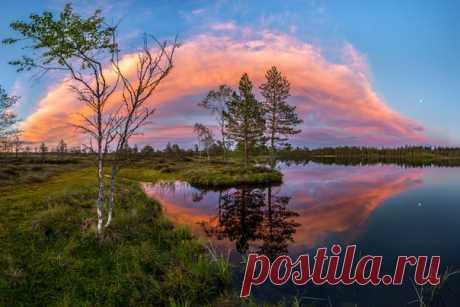 Белые ночи на севере Ленинградской области. Автор фото: Фёдор Лашков. Доброй ночи.
