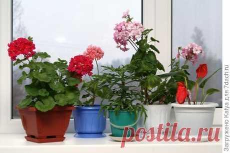 Комнатные растения: выбираем варианты для окон северного направления, для южной, юго-западной, западной и восточной стороны