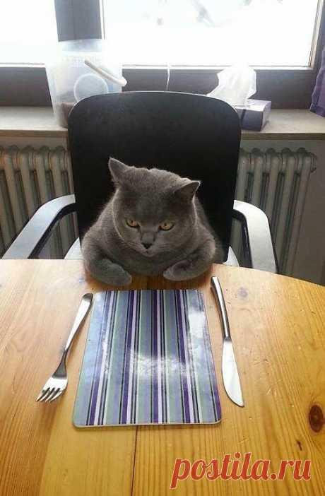 Хозяйка, неси обед