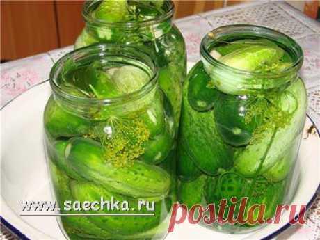 Соленые огурцы | рецепты на Saechka.Ru