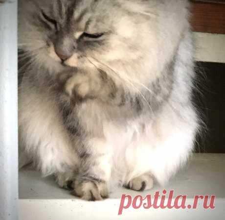 Почему кошка не любит того члена семьи, который её кормит | Мой обожаемый кот | Яндекс Дзен