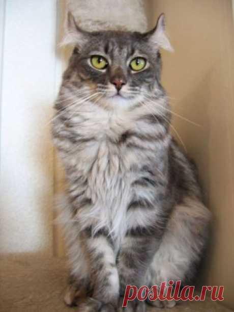 А Вы знали, сколько пород котиков существует в мире?