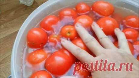 Помидоры в пластиковом ведре – солим сразу много и ооочень вкусно — Бабушкины секреты