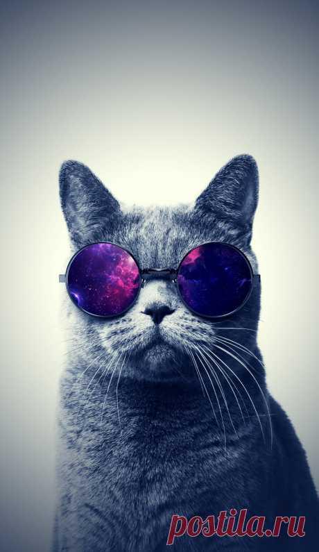 Картинки кота в очках (38 фото) ⭐ Забавник