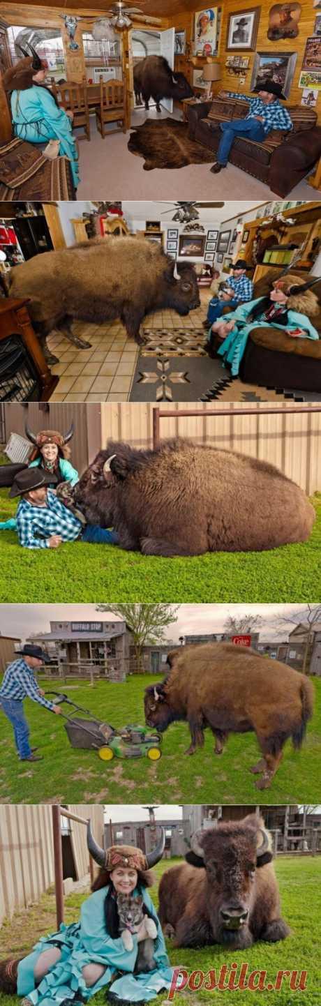 (+1) тема - Необычное домашнее животное (ФОТО) | САМЫЙ СОК!