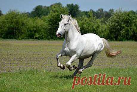 Обои животные, лошади, красавец, бег, белый скачать обои для рабочего стола,картинки на рабочий стол,заставки,изображения из раздела Животные Лошади