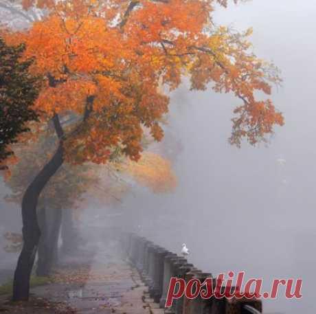"""Хвостик октября, припорошенный мокрым холодным подобием снега я называю """"Предзимье"""".  Прозрачно-серые деревья тихо стоят в ожидании белого одеяла. На фоне синюшних туч природа выглядит совсем одиноко и тускло. Прохожие по самые уши прячутся в шарфы, натягивают узкие перчатки и закрываются зонтиками. Люди в футляре.... Внутренняя тишина расширяется, заполняя собой внешний мир. Здесь главное не гнать её от себя, заглушая шумом мыслей, имитацией энергии.  Наверное, стоит признать и принять предзимь"""