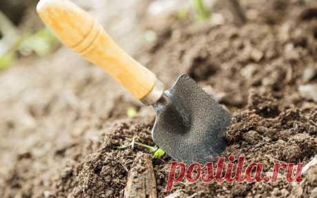 Обеззараживание почвы от грибковых инфекций   Неправильное использование почвы со временем приводит к накоплению в корнеобитаемом слое патогенных микроорганизмов, которые приводят к заболеванию растений и потере урожая. Наибольший вред огородны…