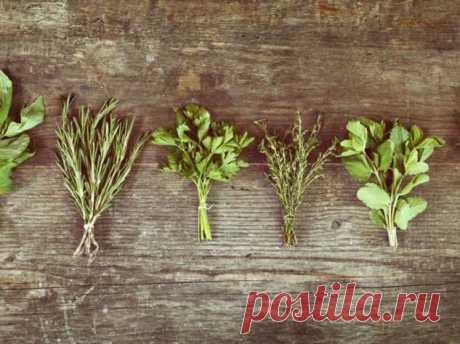 5 трав, которые эффективно снижают высокое давление | Люблю Себя