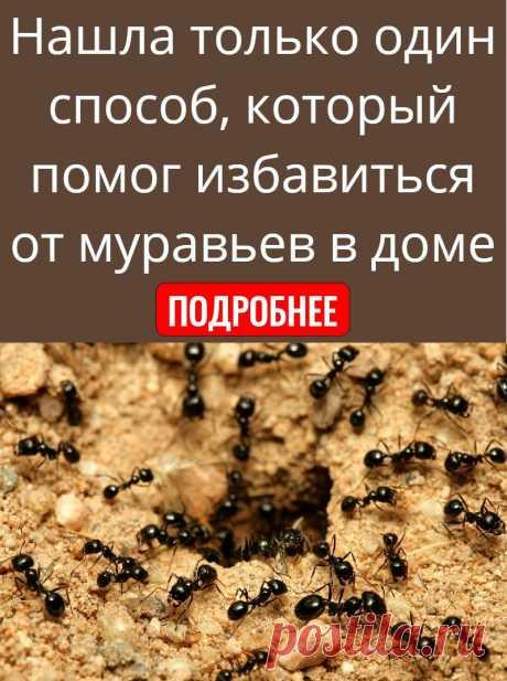 Нашла только один способ, который помог избавиться от муравьев в доме