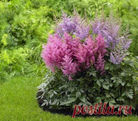 Какие цветы посадить и посеять в августе