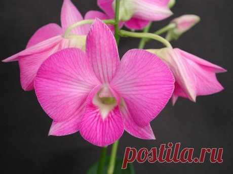 Рай для души эстета: 10 самых прекрасных цветов в мире Рай для души эстета: 10 самых прекрасных цветов в мире10 место. Дендробиум Это одна из самых прекрасных орхидей. Длинные стебли этого растения густо покрыты ароматными цветками от чисто-белой до темно...