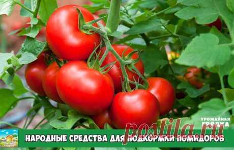 Народные средства для подкормки помидоров – самые лучшие рецепты  Первый раз помидоры подкармливают спустя 14-16 дней после высадки рассады. Это касается растений, выращиваемых как в открытом грунте, так и в теплице. После чего внесение удобрений проводят до середины июля с интервалом 2 недели.   Как подкормить помидоры йодом Йод не только ускоряет созревание плодов, но и предупреждает развитие опасного заболевания – фитофтороза. В 10 л воды растворяют 4 капли спиртового р...