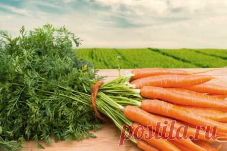 Посадка моркови весной в открытый грунт семенами. Лучшие сорта и способы посадки | Огород