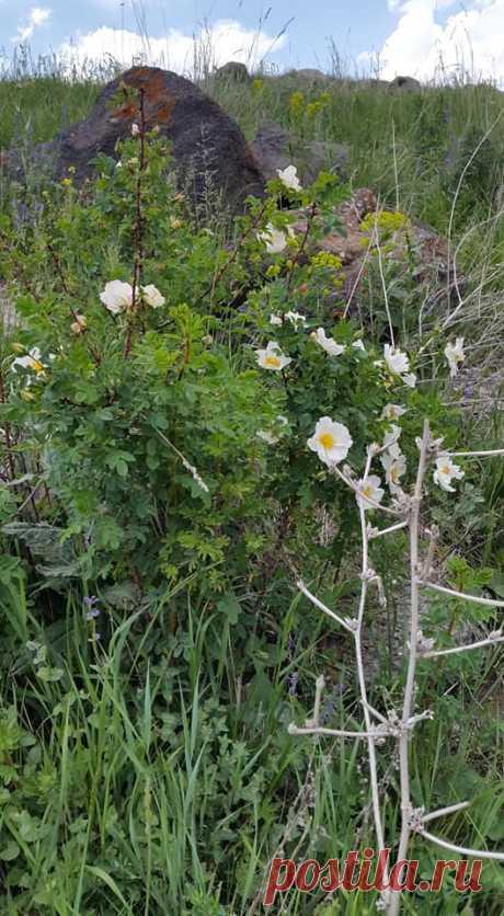 Ծաղկունք🌼 Յուրահատուկ հմայք,հոտ ու տեսք ունեն նաև հայրենի իմ բնաշխարհի ալպիական ծաղիկները....այս անմահական գեղեցկությունը տեսնելու համար ասում են մի փոքր էլ քո մեջ պետք է կրես այդ գեղեցիկից: Գեղեցիկը դա ձևի և բովանդակության ներդաշնակությունն է:Գեղեցիկը պետք է տեսնել ամենուր, ամեն ինչում...ու մեր կյանքում: Գեղեցիկ ապրելը մեծագույն հաճույք է  Լուսավորիչ Դիդրոն գեղեցիկի մասին ասել է.«Մարդու կամքից անկախ ամեն ինչ գեղեցիկ է»: