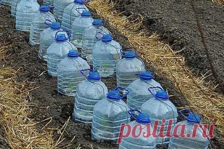 5 необычных идей применения пластиковых 5 литровых бутылок на даче | Любимая Дача | Яндекс Дзен