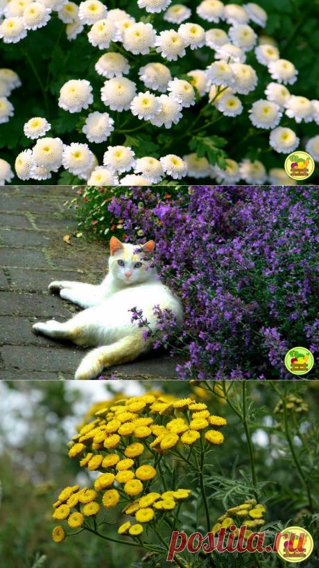 Что я посадил у себя на даче чтобы не было клещей или какие растения помогают от них избавиться   Михаил Котов   Весёлый Огородник   Яндекс Дзен