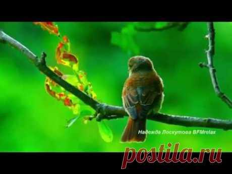 Успокаивающая музыка для сна, расслабляющий глубокий сон, снятие стресса, активация любви к себе и исцелениеASMR Радужный Макияж на Кукольной Голове (Шепотом) LivestreamНежная музыка для души и ЖИЗНИ, а Пение птиц Успокаивает нервную систему.