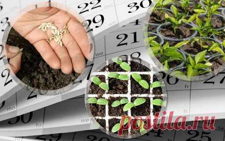 Посадочные дни в марте 2020 года: выбираем благоприятные дни для посева семенами на рассаду и пикирования В марте 2020 года в прохладных районах огородники приступают к посеву семян на рассаду, а в южных на этот месяц приходятся и посадочные дни, когда проводят пикирование на грядки. Таблица по лунному календарю поможет выбрать самые благоприятные числа.