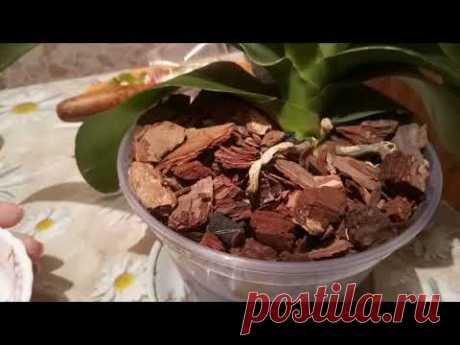 Янтарная кислота, применение для орхидей.
