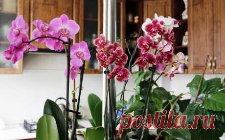 Копеечное удобрение для орхидей. Всего пару поливов, и ты не узнаешь свои цветы. - Советы и Рецепты