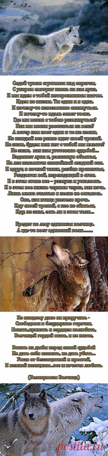 Одинокая волчица.