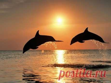 Dolphins. Curative sounds and songs of dolphins.