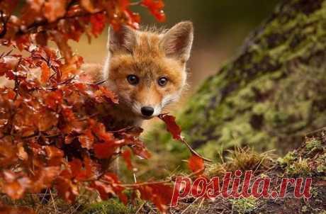 Животные, которые наслаждаются осенью