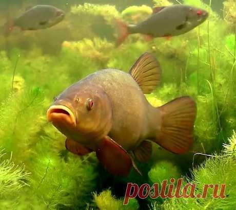 «Соска» - простой способ сделать суперснасть для донной ловли | Рыбалка для людей | Яндекс Дзен